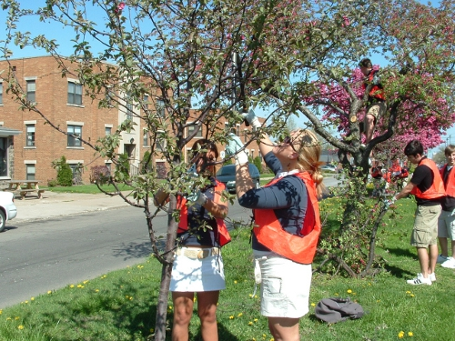State Street Pruning, Collegiate Academy Students