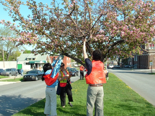 Tree Pruning, Collegiate Academy Students
