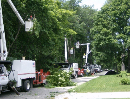 Glenwood Tree Removal